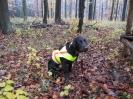 Jagd und Hund 2