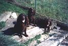 frühere Hunde